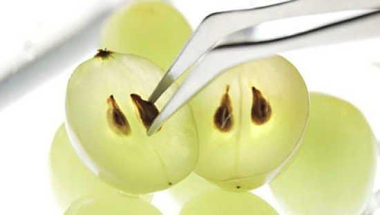 semilla-de-uva-propiedades-curativas